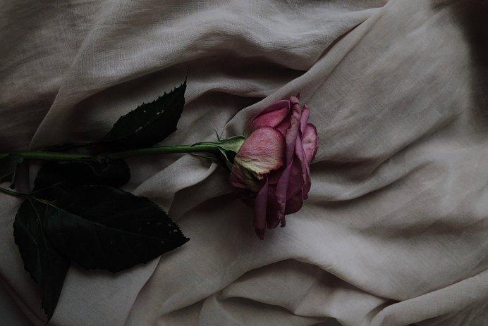 Современный эротический роман «Эйфория» Энн Канты